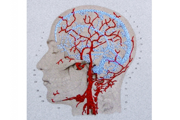 Brain Anatomy Journal by Fabulous Cat Papers