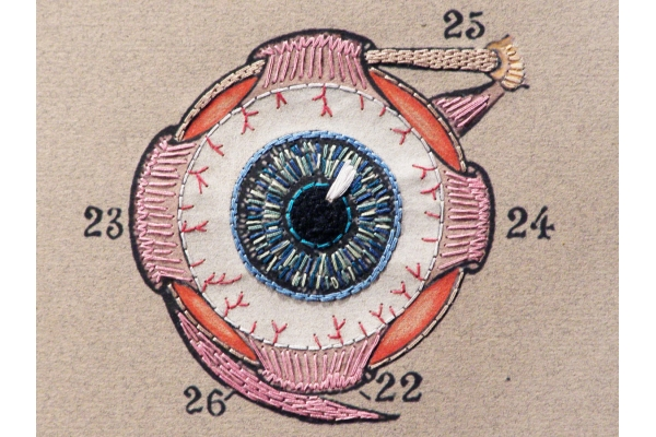Eye Anatomy. Paper Embroidery by Fabulous Cat Papers