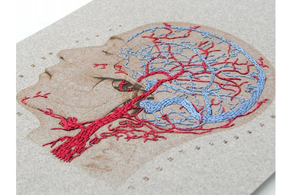 Brain Anatomy Art. Veins and Arteries of the Head by Fabulous Cat Papers