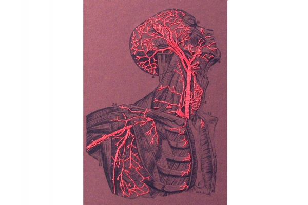 Anatomy Book. Torso and Head by Fabulous Cat Papers