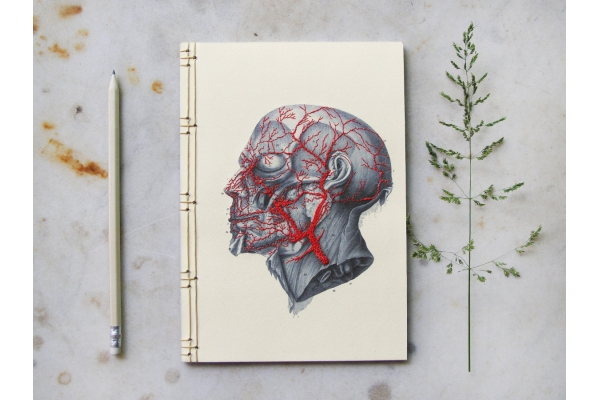 Anatomy Journal. Head by FabulousCatPapers