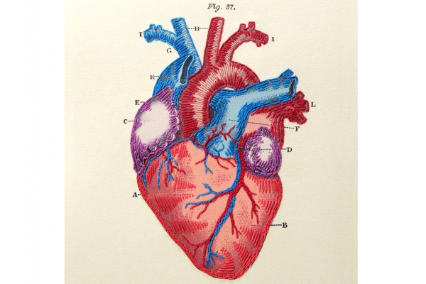 Heart Anatomy Journal by Fabulous Cat Papers