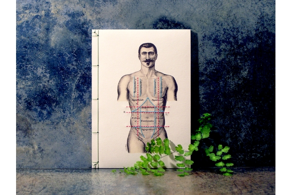 Regions of the Torso of the Human Male by Fabulous Cat Papers