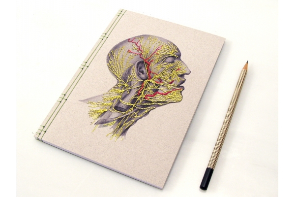 Nervous System of the Head by Fabulous Cat Papers