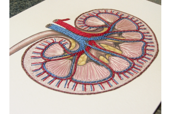 Kidney Anatomy. Paper Embroidery by Fabulous Cat Papers