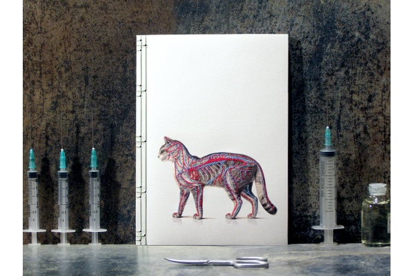 Cat Anatomy Journal by Fabulous Cat Papers