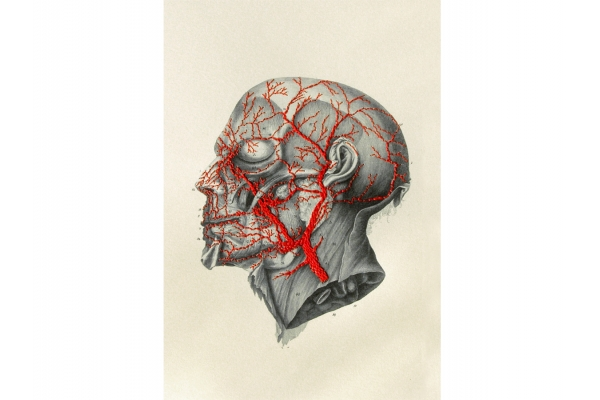 Blood Circulation of the Head by Fabulous Cat Papers