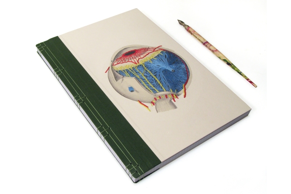 Eye Anatomy Book by Fabulous Cat Papers
