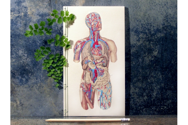 Circulatory System of the Human Body by Fabulous Cat Papers