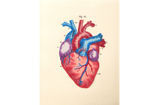 Anatomical Heart. Paper Embroidery by Fabulous Cat Papers