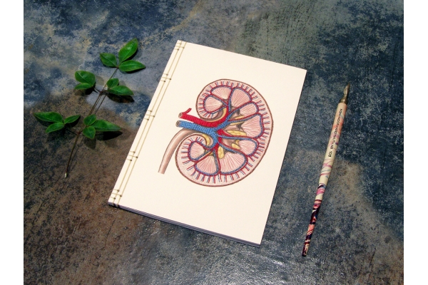 Kidney Anatomy Journal by Fabulous Cat Papers