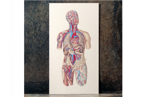 Circulatory System of the Human Body. Embroidered Anatomy by Fabulous Cat Papers