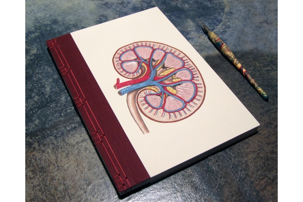 Kidney Anatomy Book by Fabulous Cat Papers