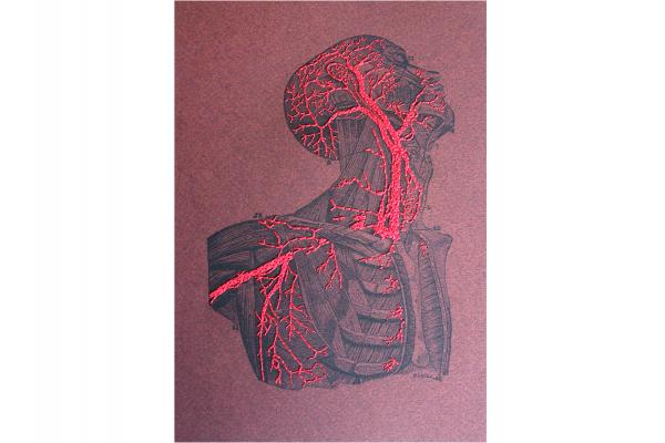 Torso & Head Anatomy. Paper Embroidery