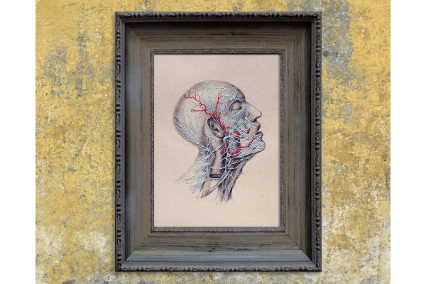 Nerves. Anatomical Paper Embroidery by Fabulous Cat Papers