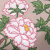 Peony Tree Journal by Fabulous Cat Papers