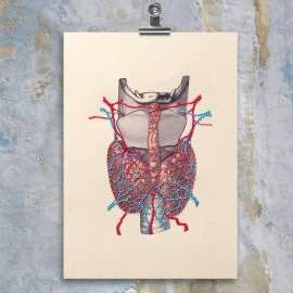 Thyroid Gland Anatomy by Fabulous Cat Papers