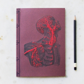 Anatomy Journal. Head and Torso by Fabulous Cat Papers