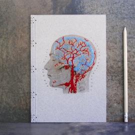 Brain Anatomy Journal
