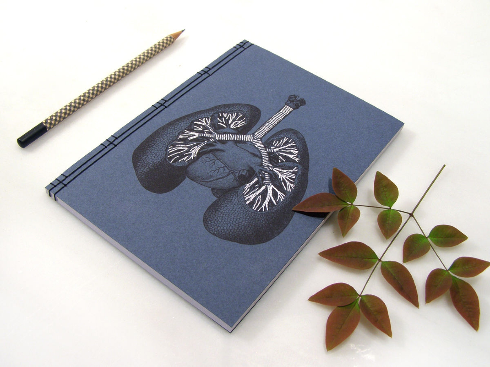 Lungs Anatomy Notebook by Fabulous Cat Papers   FabulousCatPapers