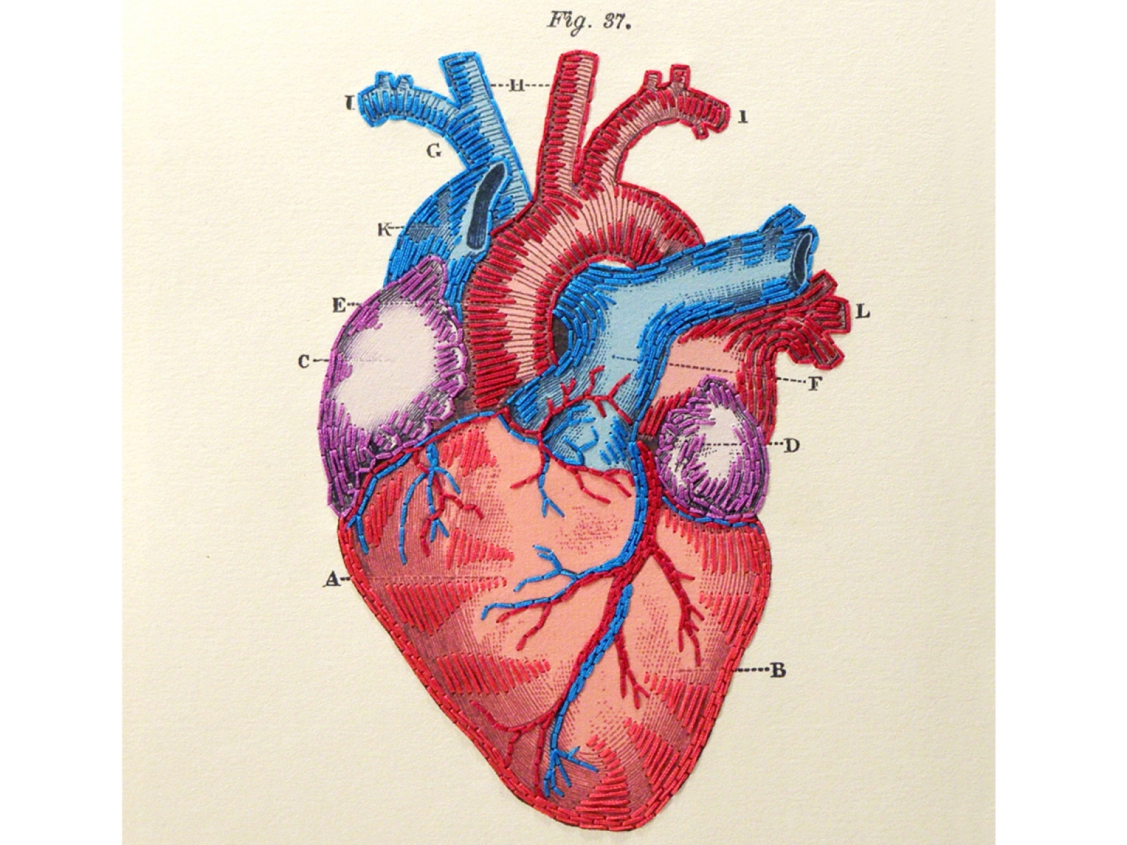 Heart Anatomy Journal By Fabulous Cat Papers Fabulouscatpapers