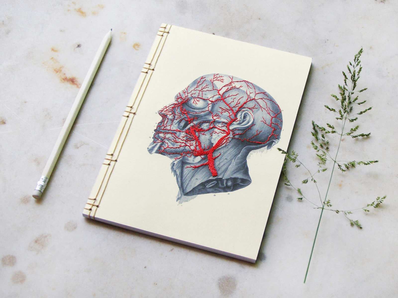 Anatomy Journal By Fabulous Cat Papers Fabulouscatpapers