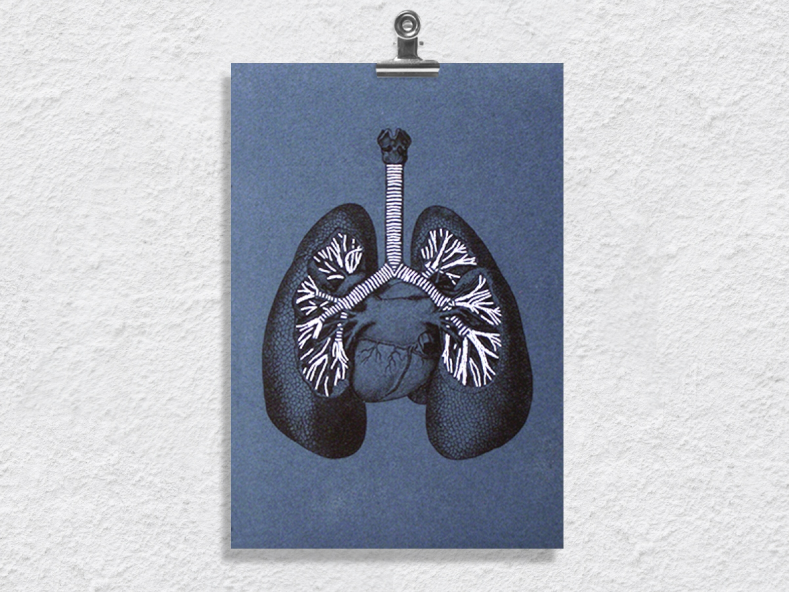 Lungs Anatomy. Paper Embroidery by Fabulous Cat Papers ...