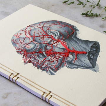 Anatomy Journal. Head