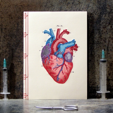 Heart Anatomy Journal