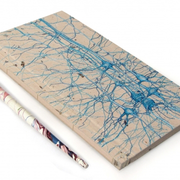 Neurons Journal. Studie No3