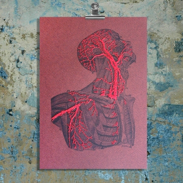 Torso & Head Anatomy. Paper Embroidery