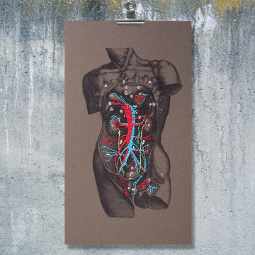 Dissection of a Male Torso. Paper Embroidery