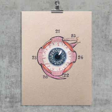 Eye Anatomy. Paper Embroidery