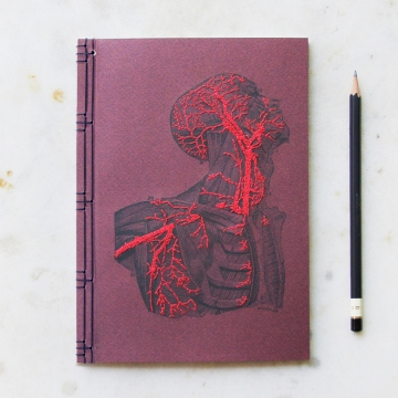 Anatomy Journal. Head and Torso