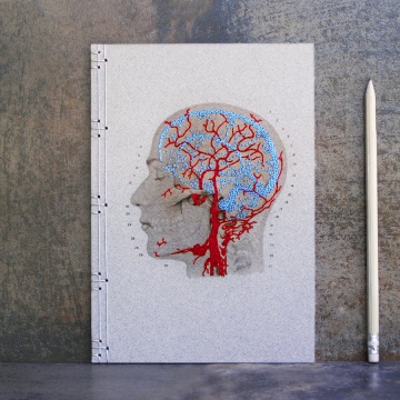 Brain Anatomy Journal. Veins and Arteries