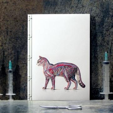 Cat Anatomy Journal