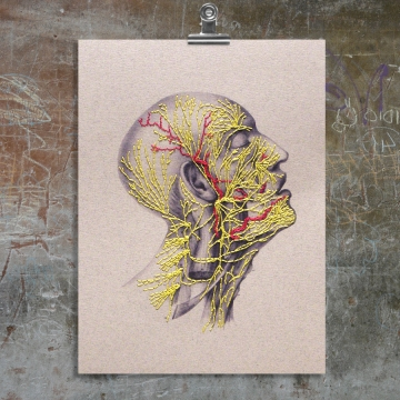 Nervous System of the Head. Paper Embroidery