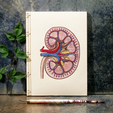 Kidney Anatomy Journal