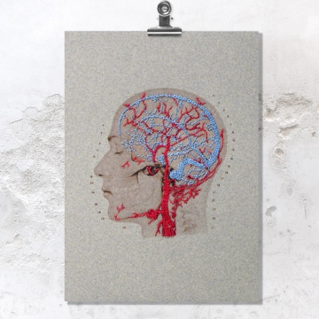 Brain Anatomy Art. Veins and Arteries of the Head