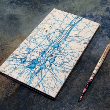 Neurons Journal. Studie No2