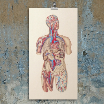 Circulatory System of the Human Body. Embroidered Anatomy