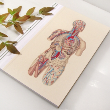 Circulatory System of the Human Body Book