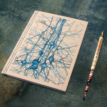 Neurons Journal. Study No1