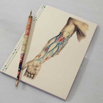 Arm Anatomy Journal