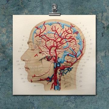 Anatomy Art. Veins and Arteries of the Head