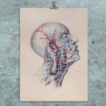 Nerves. Anatomical Paper Embroidery