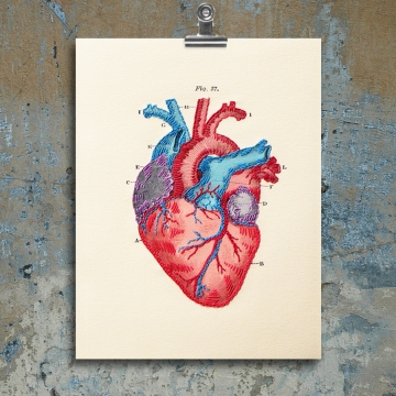 Anatomical Heart. Paper Embroidery