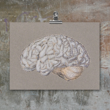 Anatomical Brain. Paper Embroidery