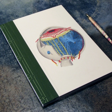 Eye Anatomy Book